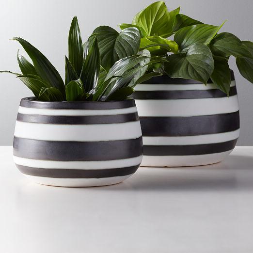 Maxie Graphic Striped Planters