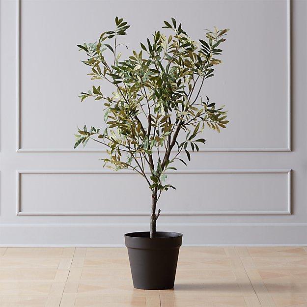 Olivetree4ftshs19