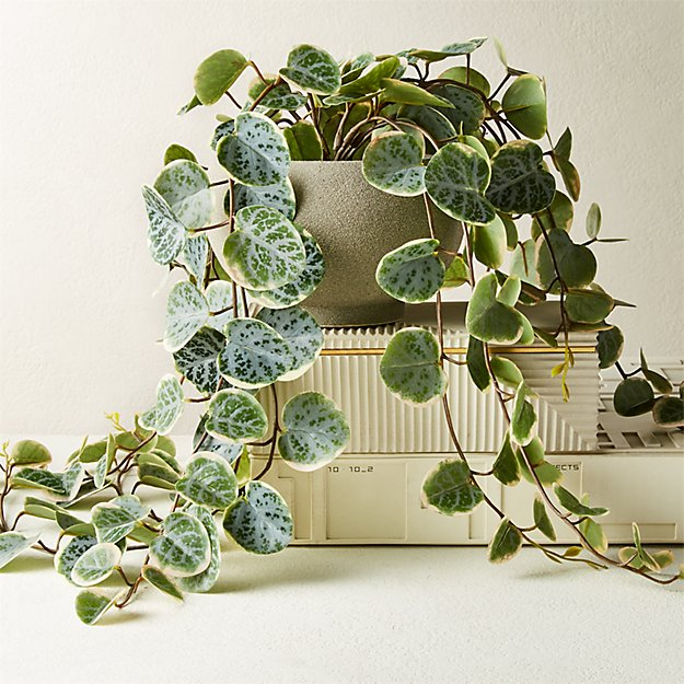 """Potted Faux Eucalyptus 8"""" - Image 1 of 3"""