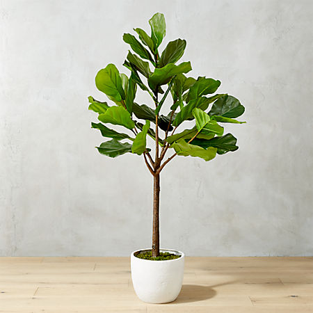 65 Potted Faux Fiddle Leaf Fig Reviews Cb2