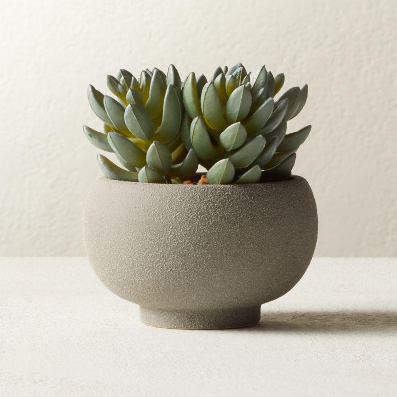 Potted Faux Succulents 4 25 Reviews Cb2