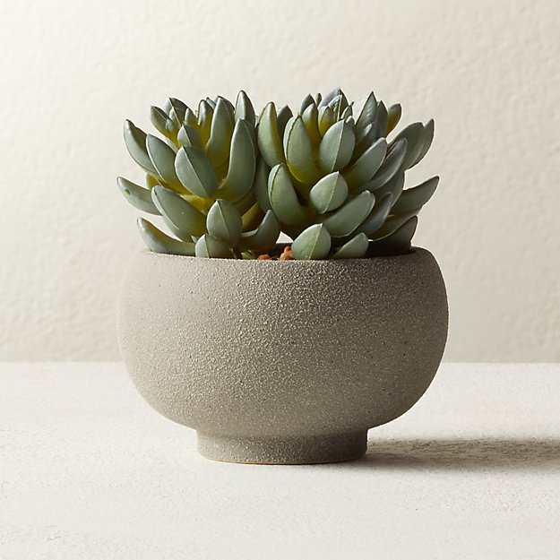 "Potted Faux Succulents 4.25"" - Image 1 of 3"