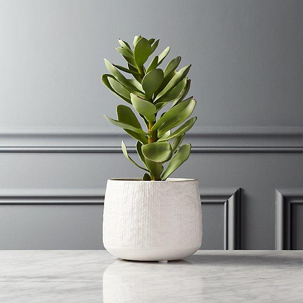 potted faux succulent white pot reviews cb2. Black Bedroom Furniture Sets. Home Design Ideas
